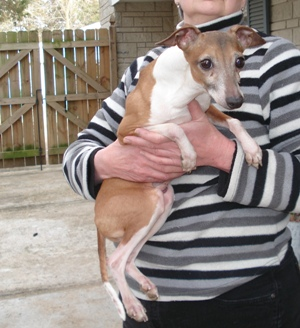 The St  Louis Senior Dog Project: Meet Armani