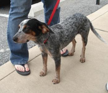 Senior Dog Rescue St Louis
