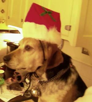 Christmasbeagle
