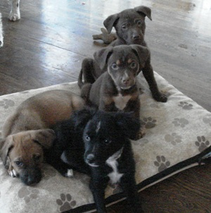 Puppiesready