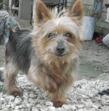 Oldestdog