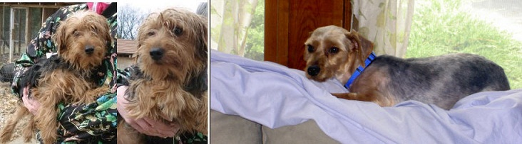 Bodie_Before_&_After[1]