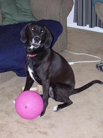 SAmmyhappydog