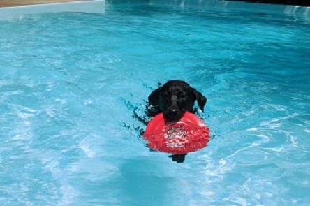 Lenaswims