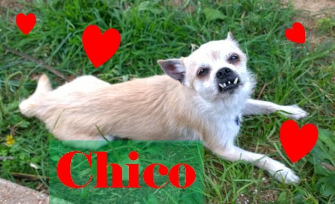 Chicolove