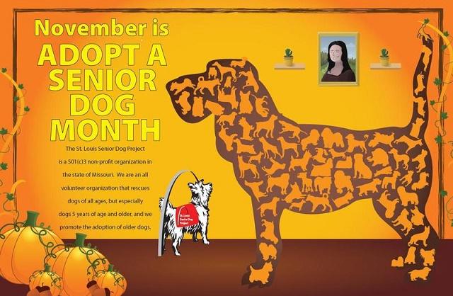 Adopt+a+senior+dog