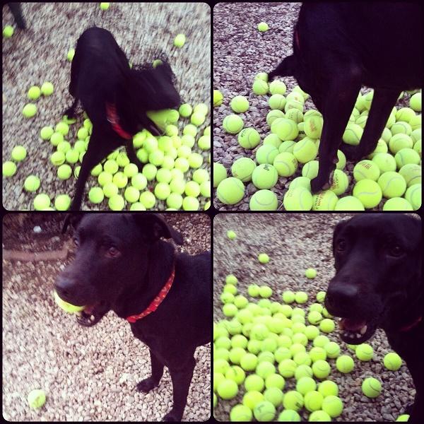 Scarletballs
