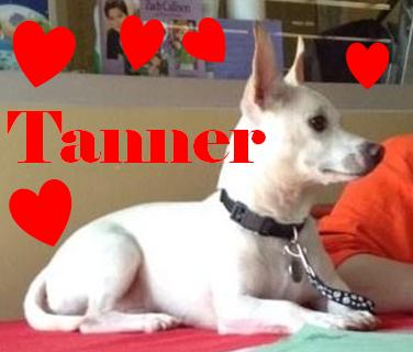 Tannerlove