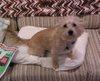 Buffy_pillow